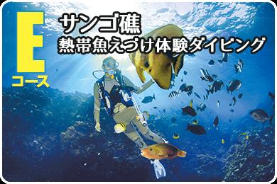 珊瑚礁・熱帯魚餌付け