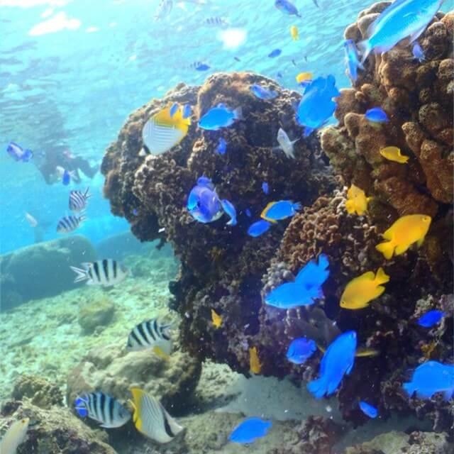 真荣田海角热带鱼喂食体验