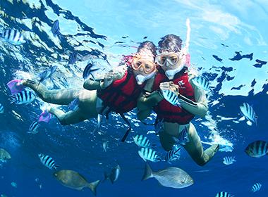 サンゴ礁・熱帯魚餌付け